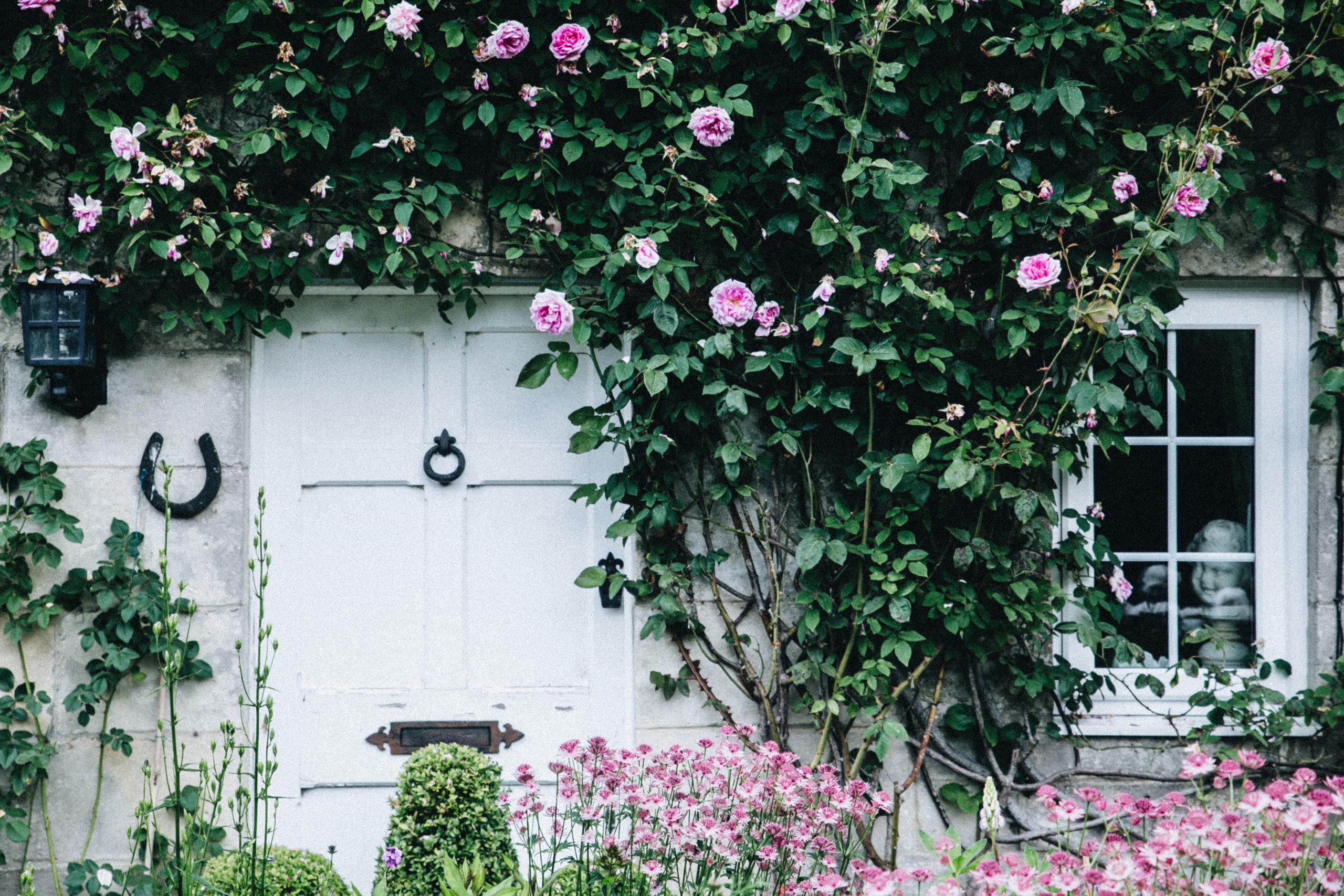 england cottage roses